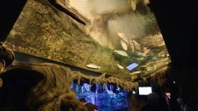 Photo Contest: Best Georgia Aquarium Shot