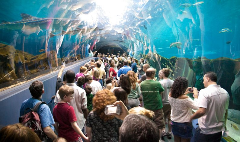 America's Magnificent Carpets Awards to be in Ga Aquarium