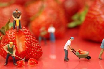 Berry Work